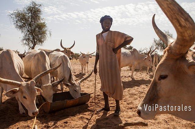 VoiPastorales : Partage de stratégies pour renforcer la résilience des systèmes pastoraux au travers du théâtre forum